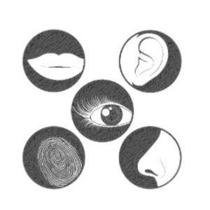 Mémoire hypnose marie lapeyrie